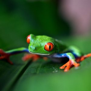 All About Costa Rica Wildlife
